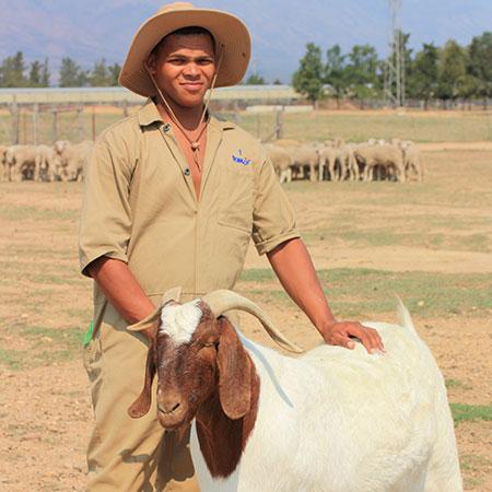 Tomis animal welfare policy