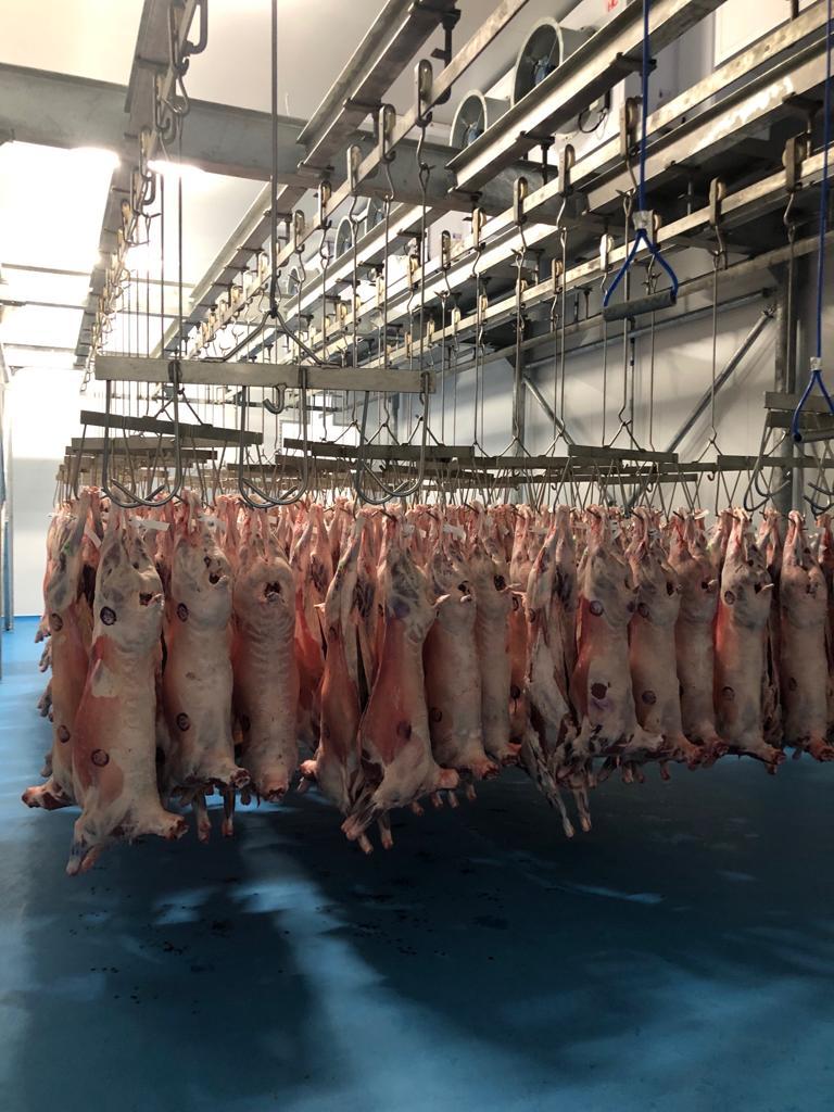 Lamb Abattoir